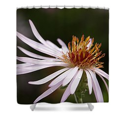 Shower Curtain featuring the photograph Climbing Aster by Paul Rebmann