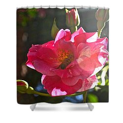 Climbing Rose And Bumble Bee Shower Curtain