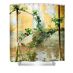 Shower Curtain featuring the photograph Climbing Rose Plant by Silvia Ganora