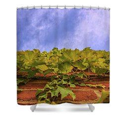 Climbing The Walls - Ivy - Vines - Brick Wall Shower Curtain by Jason Politte