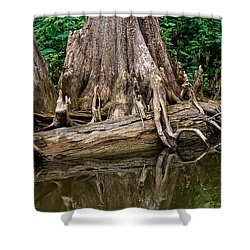 Clinging Cypress Shower Curtain by Christopher Holmes
