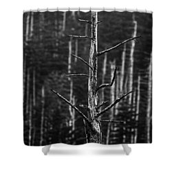 Shower Curtain featuring the photograph Clingman's Dome Skeletons by Andy Crawford