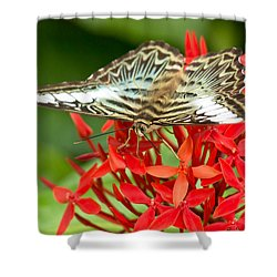 Clipper Butterfly Shower Curtain