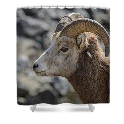 Close Big Horn Sheep  Shower Curtain