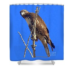 Hawk Close Up  Shower Curtain