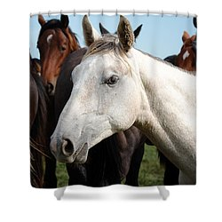 Close-up Herd Of Horses. Shower Curtain