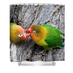 Close-up Of A Pair Of Lovebirds, Ndutu Shower Curtain