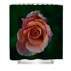 Close-up Of A Pink Rose, Beverly Hills Shower Curtain