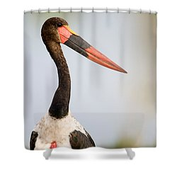 Close-up Of A Saddle Billed Stork Shower Curtain