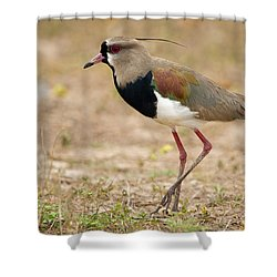 Close-up Of A Southern Lapwing Vanellus Shower Curtain