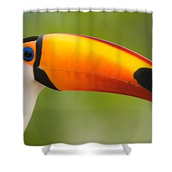 Close-up Of A Toco Toucan Ramphastos Shower Curtain