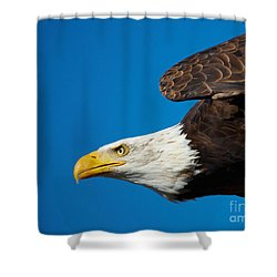 Close-up Of An American Bald Eagle In Flight Shower Curtain by Nick  Biemans