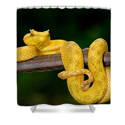 Close-up Of An Eyelash Viper Shower Curtain by Panoramic Images