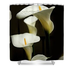 Close Up Of Calla Lily Flowers Growing Shower Curtain