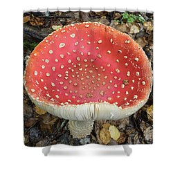 Close-up Of Red Mushroom Growing Shower Curtain