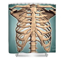 Close-up View Of Human Rib Cage Shower Curtain by Stocktrek Images