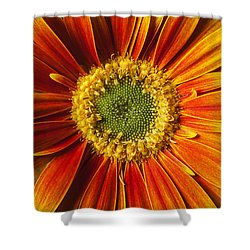 Close Up Yellow Orange Mum Shower Curtain by Garry Gay