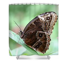 Closed Blue Morpho Shower Curtain