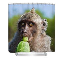 Closeup Monkey Eating Cucumber Shower Curtain