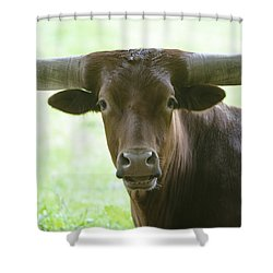 Closeup Texas Longhorn Shower Curtain