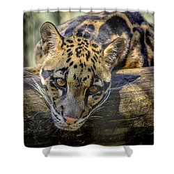 Shower Curtain featuring the photograph Clouded Leopard by Steven Sparks
