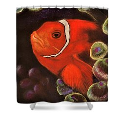 Clown Fish In Hiding  Pastel Shower Curtain