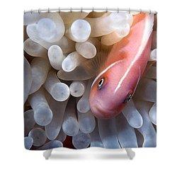 Clownfish 12 Shower Curtain by Dawn Eshelman