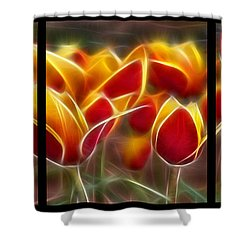 Cluisiana Tulips Triptych  Shower Curtain by Peter Piatt