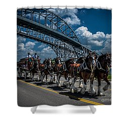 Clydesdales And Blue Water Bridges Shower Curtain