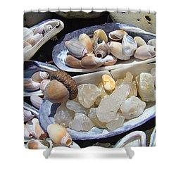 Coastal Beach Art Prints Agates Shells Acorn Shower Curtain by Baslee Troutman