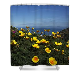 Shower Curtain featuring the photograph Coastal California Poppies by Susan Rovira