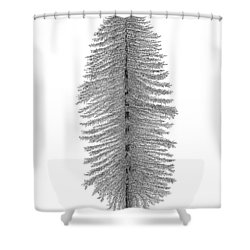 Coastal Redwood Shower Curtain