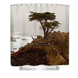 Coastline Cypress Shower Curtain by Melinda Ledsome