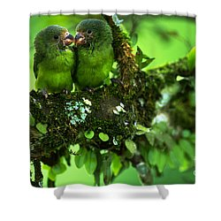 Cobalt-winged Parakeets Shower Curtain by Art Wolfe