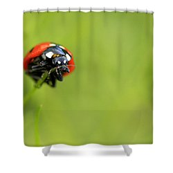 Coccinellidae  Shower Curtain