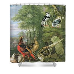 Cock Pheasant Hen Pheasant And Chicks And Other Birds In A Classical Landscape Shower Curtain by Pieter Casteels