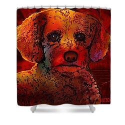 Cockapoo Dog Shower Curtain by Marlene Watson
