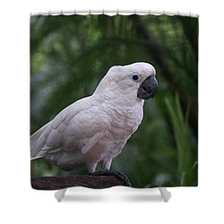 Shower Curtain featuring the photograph Cockatoo by Athala Carole Bruckner
