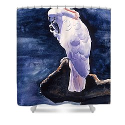 Cockatoo Shower Curtain by Melinda Fawver