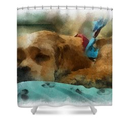 Cocker Spaniel Photo Art 06 Shower Curtain by Thomas Woolworth