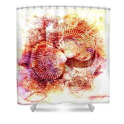 Cockle Clamshell Shower Curtain