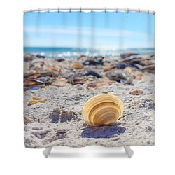 Shower Curtain featuring the photograph Cockle Shell Summer At Sanibel by Peta Thames