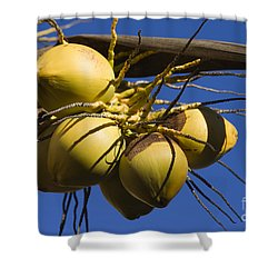 Shower Curtain featuring the photograph Coconut 1 by Teresa Zieba