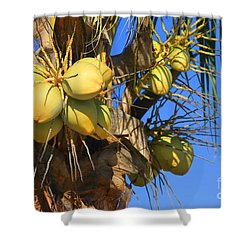 Coconut 2 Shower Curtain by Teresa Zieba