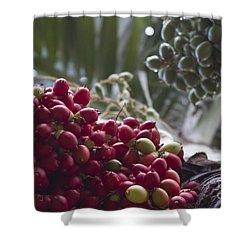 Cocos Nucifera - Niu Mikihilina - Palma - Niu - Arecaceae -  Palmae Shower Curtain by Sharon Mau