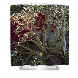 Cocos Nucifera - Niu Mikihilina - Palma Shower Curtain by Sharon Mau