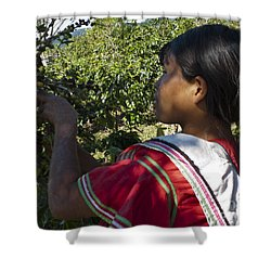 Coffee Harvest Time 3 Shower Curtain by Heiko Koehrer-Wagner