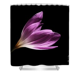 Shower Curtain featuring the photograph Colchicum  by Judy Whitton