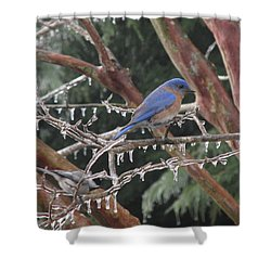 Cold And Blue Shower Curtain