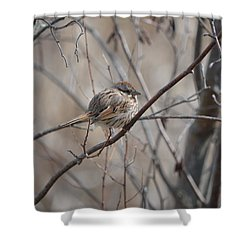 Cold Shower Curtain by James Petersen